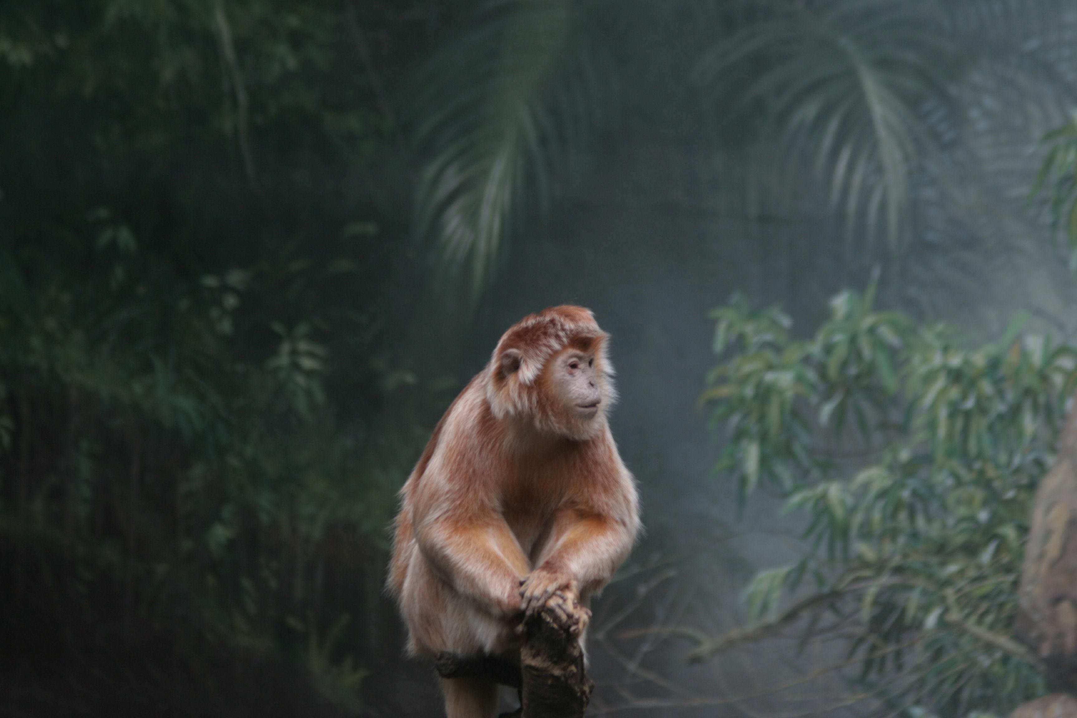 http://buddydon.blogspot.ru/Silver_Leaf_Monkey_Bronx_Zoo.jpg